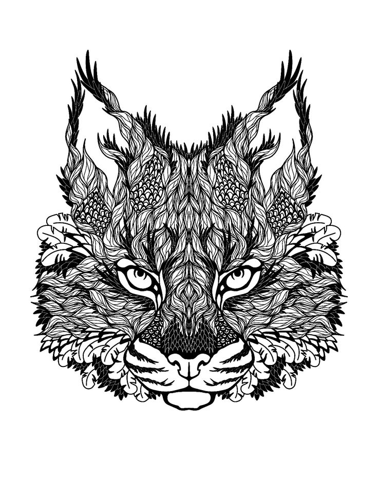 Hard Coloring Pages Of Cats