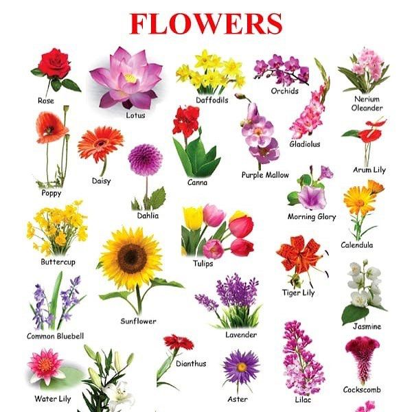 Flowers Uplift The World Beauty Flowersofinstagram Gardensofflowersmakemehappy Soulfood Flower Images With Name Flowers Name List Flower Names