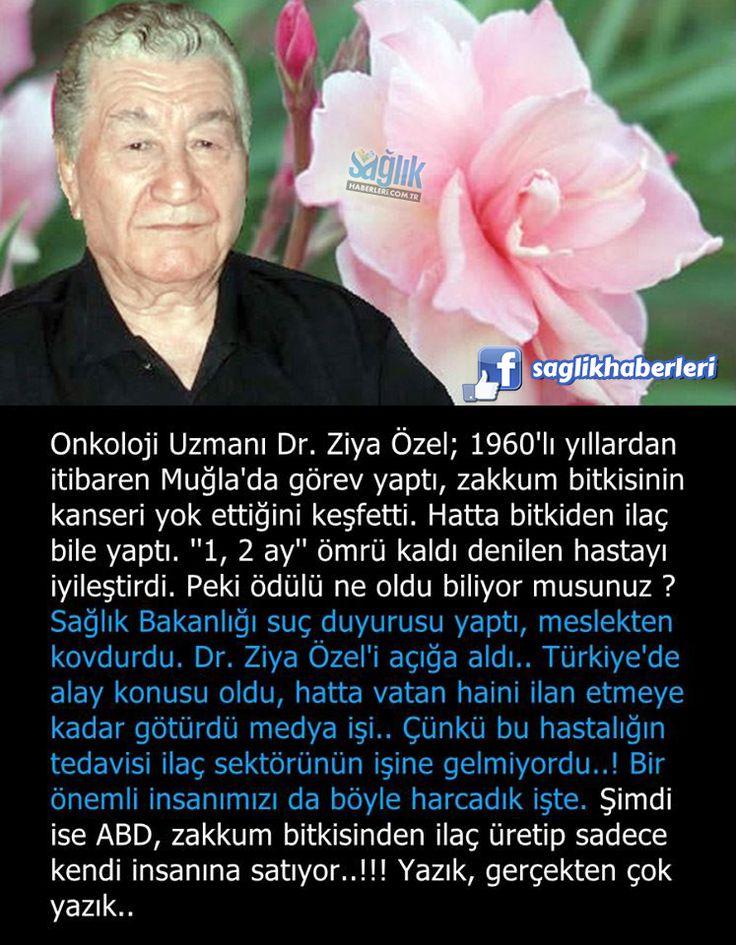 """Onkoloji Uzmanı Dr. Ziya Özel; 1960'lı yıllardan itibaren Muğla'da görev yaptı, zakkum bitkisinin kanseri yok ettiğini keşfetti. Hatta bitkiden ilaç bile yaptı. """"1, 2 ay"""" ömrü kaldı denilen hastayı iyileştirdi. Peki ödülü ne oldu biliyor musunuz? Sağlık Bakanlığı suç duyurusunda bulundu ve meslekten kovdurdu. Dr. Ziya Özel'i açığa aldı.. Türkiye'de alay konusu oldu, hatta vatan haini ilan etmeye kadar götürdü medya işi.. Çünkü bu hastalığın tedavisi ilaç sektörünün işine gelmiyordu..! Bir…"""