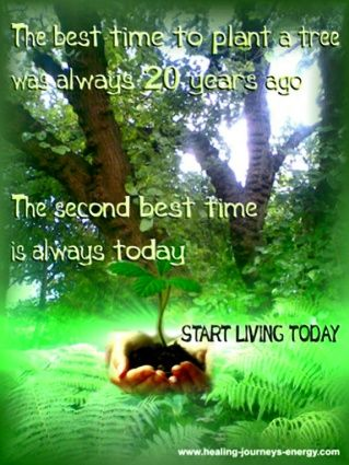 The Best Time To Plant A Tree Was Always 20 Years Ago The Second