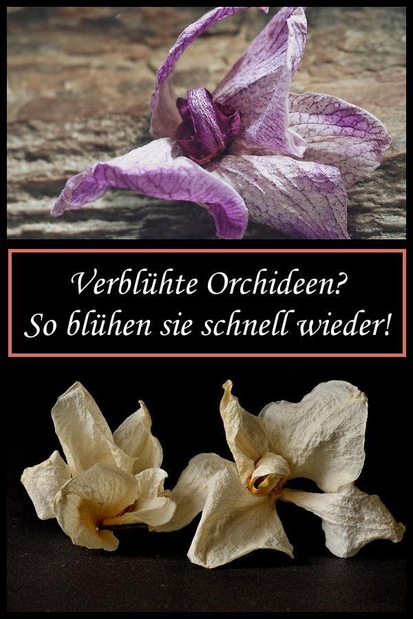 Orchideen verblüht? So blühen sie schnell wieder!