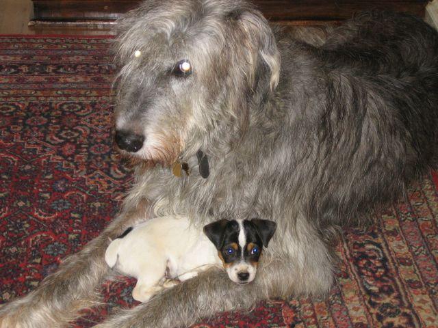 Tiz Herself with my Mom's Irish Wolfhound