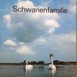 Bilderbuch: Schwanenfamilie