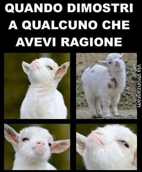 per me aveva molto ma molto ma molto ma molto ma molto ragione quell'agnellino( se fa quel muso io non mi metto contro di lui/lei!!)