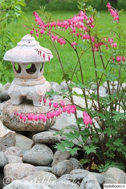 puutarha,kukat,piha,kukkia,pihan istutukset