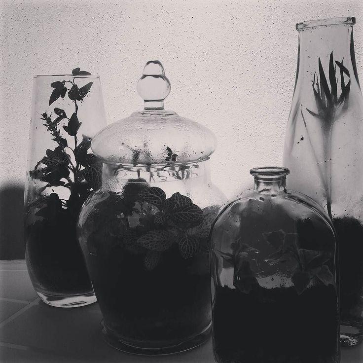 Poco a poco mi mesa de trabajo mi biblioteca  estanterías. .. toda mi casa se va llenando de terrarios. Me encanta la sensación de ir encontrando por todas partes pequeños mundos verdes. .. vivos!  #terrario #terrarium #miniature #glass #plantas #plants #bellainvasion