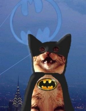 Never fear ! BatCat is here !!