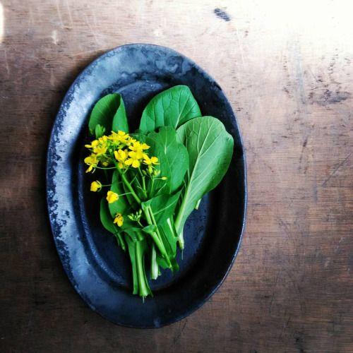 小松菜 ついていた根を 庭に植えたら 花が咲きました ので おみそ汁へ 味も香りも 貧弱でした  #楕円皿 #オーバル皿