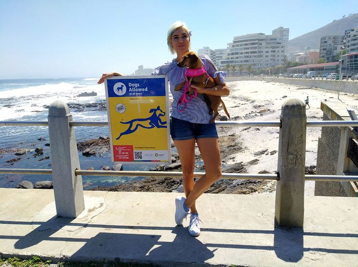 On a daily basis I get tweets asking me about the dog friendly beaches along the Atlantic seaboard. So I have compiled a list .    These are the only dog friendly beaches listed on City of Cape Town Website  The DOG FRIENDLY BEACHES along the Atlantic