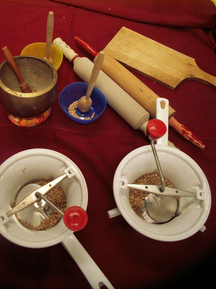 Semis de grains de blé dans la classe des moyens et des grands. Dans le potager. Dans la classe. Avec le blé, fabrication de farine. Différents outils pour moudre les grains. Avec la farine, fabrication de pain.
