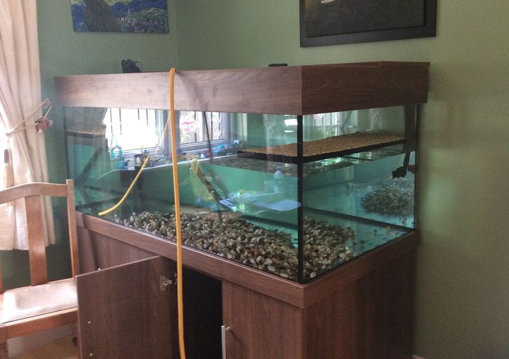 Turtle/terrapin, reptile aquarium size 60x24x30 with cabinet and hood from Prime Aquariums Ltd in London