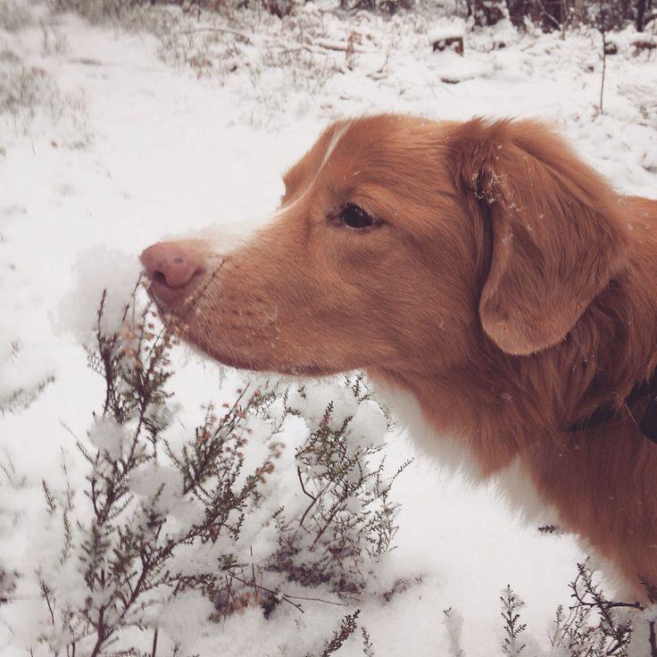 Sniff snow
