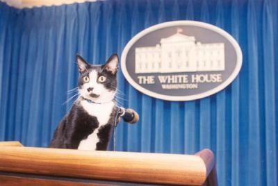 Photograph of Socks the Cat, from the William J. Clinton Presidential Library (taken 12/5/1993, photo ID P1044018A)