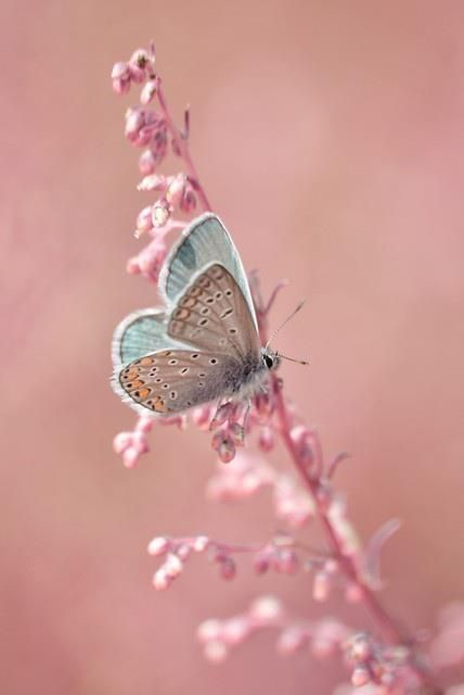 pink flower and blue butterfly