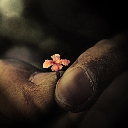 Душевный покой никогда не приходит через приобретение каких-либо вещей. Душевный покой начинается с чувства благодарности за то, что уже имеешь. БЛАГОДАРНОСТЬ — это СИЛА.     Если вы испытываете чувство благодарности за все, что имеете, — за родных, друзей, за достаток — вы привлекаете к себе еще больше хороших людей и еще больший достаток. Начните с благодарности. Радуйтесь тому, что имеете Сейчас, и в будущем поводов для благодарности станет больше.    #Елена_Иссенгел #Путь_к_себе…