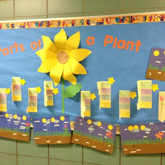 Plant unit bulletin board :): Bullentin Boards, L7 Plants, Plants Bulletin Board, Plants Theme, Bulletin Boards, Awesome Classrooms, Plants Unit, Plant Bulletin, Kindergarten Science Plants