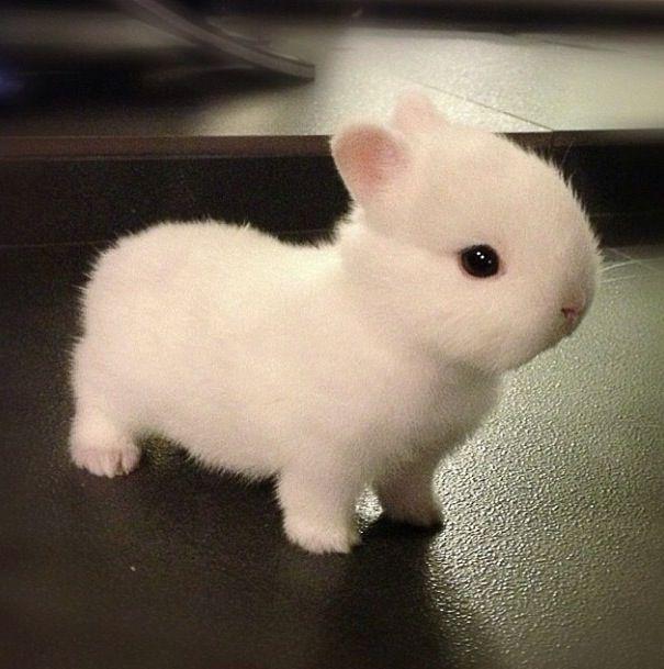 29 Best Images About Dwarf Bunnies On Pinterest