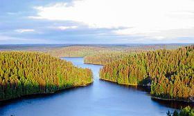 Repoveden Kansallispuisto Kesayonauringossa.jpg Finland