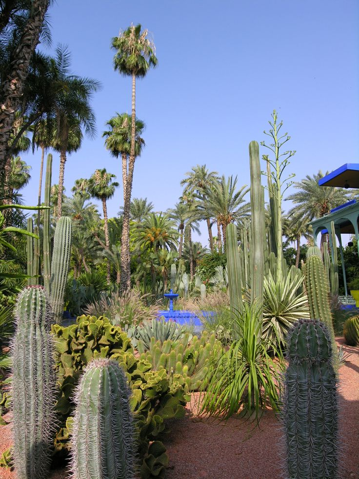 Marjorelle Gardens in Marrakech. Create this look with the help of Maroque. http://www.maroque.co.uk/