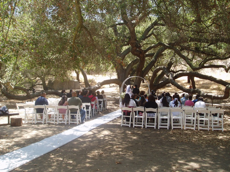 Get Married Amongst The Oldest And Most Majestic Oak Trees
