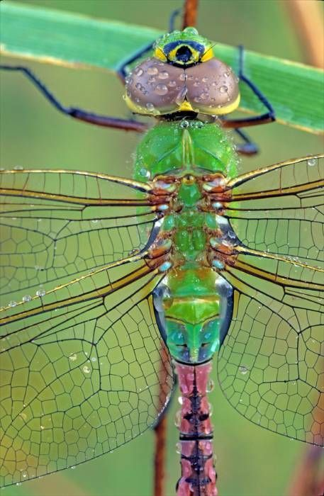 Delicate iridescent wings of glass symmetrical in formation.  Gaze at the many faces within the body of this dear friend.  The soft shades merely captivate one to the point of not blinking an eye, simply cheerful and full of glee.  Photographer Middleton Evans