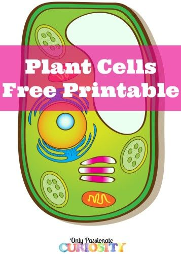 Learning About Plant Cells {Free Printable} -
