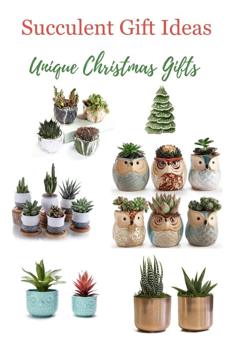 Christmas Succulent Gift Ideas.Easy Succulent Gift Ideas Beautiful Simple Succulent