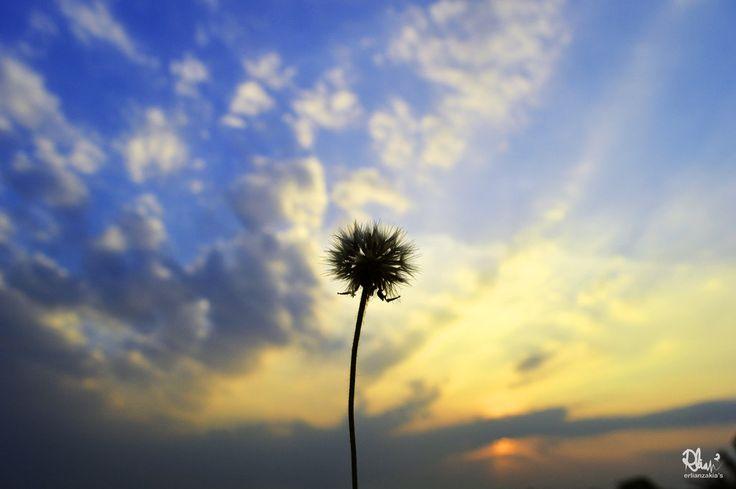 Withered Dandelion by azayaka-eizan.deviantart.com on @DeviantArt