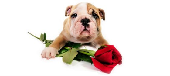 5 Reasons Your Dog Should Be Your Valentine
