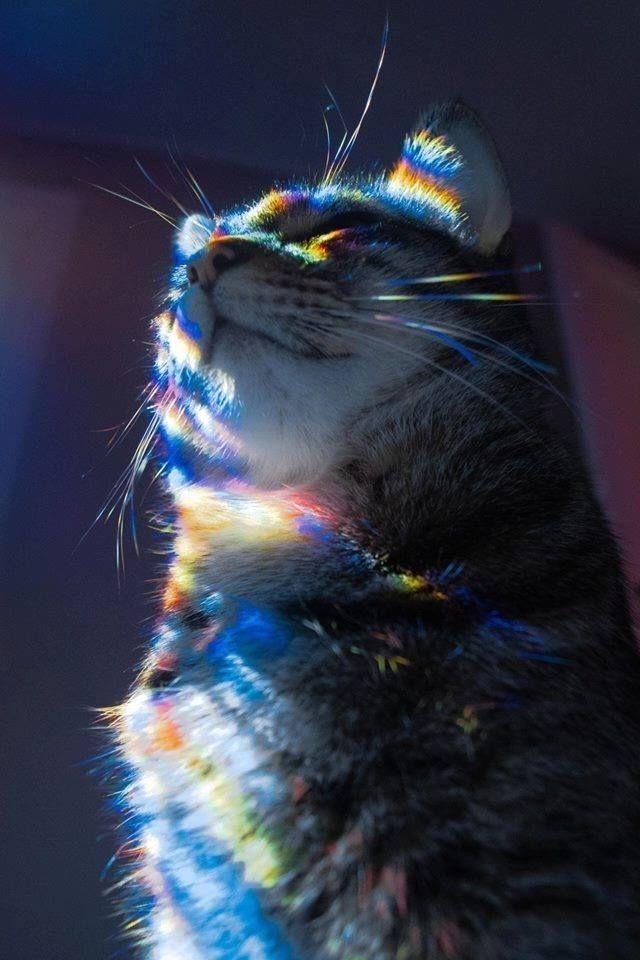 коты с радугой на лице услуг