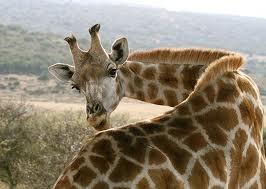 go on a south african safari