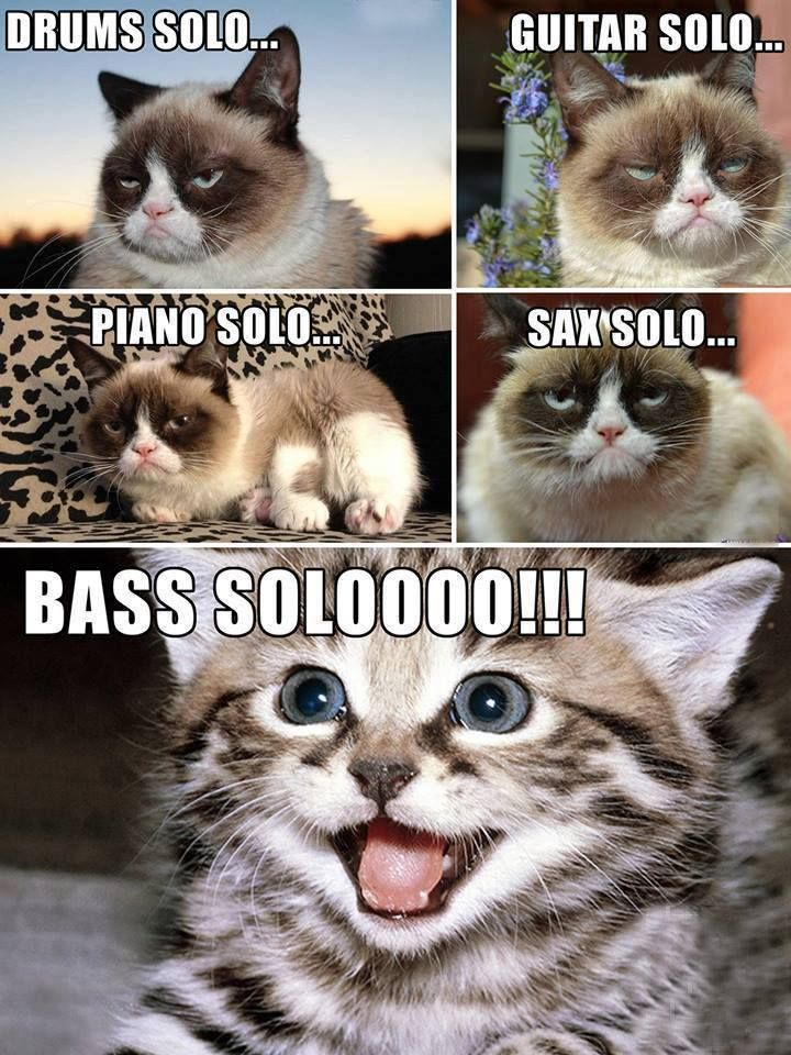 #bass #solo #cats
