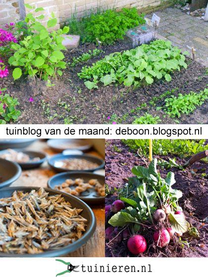 Tuinblog van de maand juni - tuinieren.nl