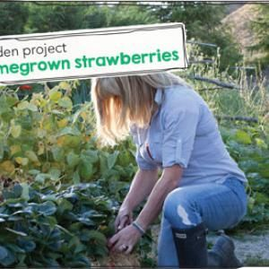 Strawberry Growing Guide