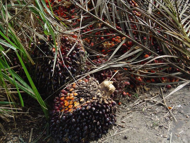 Until that wonderful day when palm oil gets off the environmental black-list, there are a few simple things you can do to…