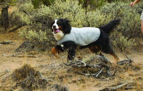 The Ruffwear Swamp Cooler, a cooling coat for dogs to keep them cool in the hot weather. Now on sale for a limited time only at Barks & Bunnies.