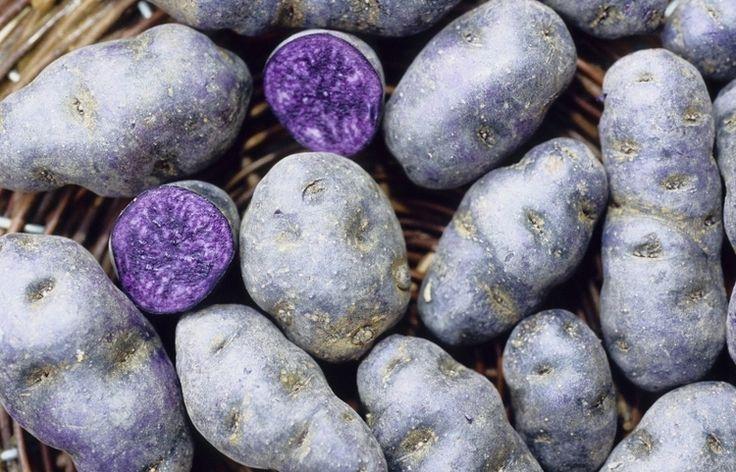 Už ste niekedy jedli fialovú zemiakovú kašu? Ak nad touto predstavou krčíte nosom, neunáhlite sa. Fialové zemiaky sú oveľa zdravšie ako tie, ktoré bežne konzumujete.