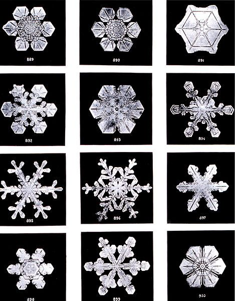 "Snowflake photos by Wilson Bentley circa 1902. Bentley poetically described snowflakes as ""tiny miracles of beauty"" and snow crystals as ""ice flowers."" He died of pneumonia at his farm[4] on December 23, 1931, after walking six miles in a blizzard so he could photograph more snowflakes."