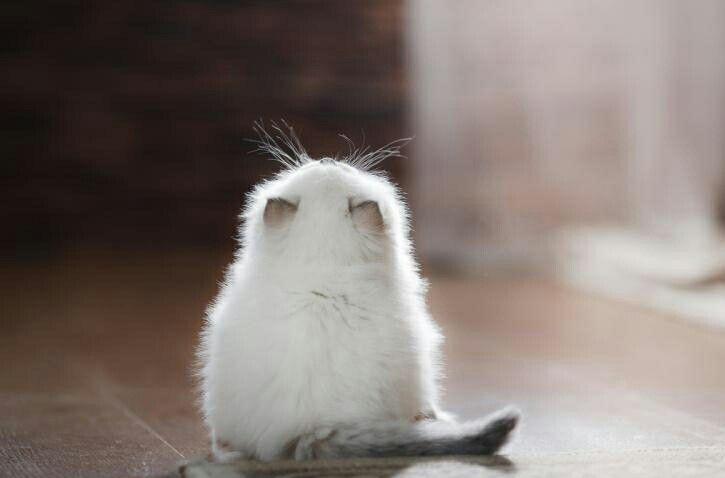 https://tr.pinterest.com/esraerkacan-- My goodness this is a sweet photo of a white and grey kitten.