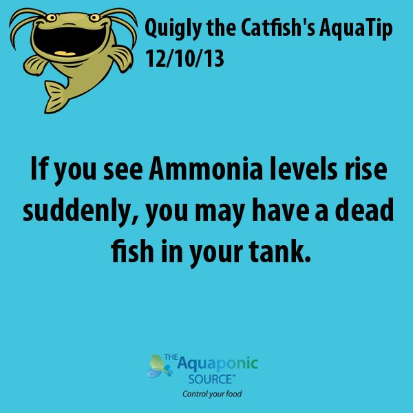 If you see Ammonia levels rise suddenly, you may have a dead fish in your tank.