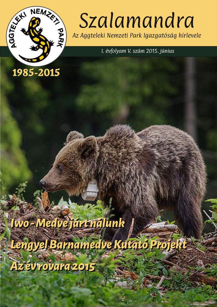 Medve járt a Karszton! #medve #bear #szalamandra #anpi