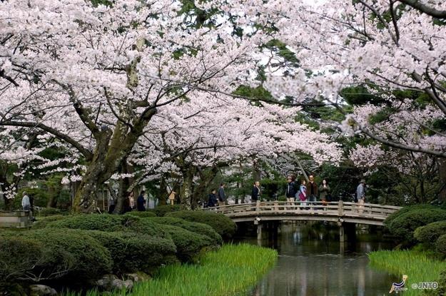 Περίοδος Heian.  Κατά την σχετικά ειρηνική περίοδο Heian, η πρωτεύουσα του κράτους μεταφέρθηκε στο Κιότο όπου οι πλούσιοι αριστοκράτες έφτιαχναν μεγάλους Shinden κήπους στα παλάτια και τις βίλες τους με σκοπό την ψυχαγωγία αυτών και των καλεσμένων τους. Χρησιμοποιούνταν για τεράστιες δεξιώσεις, βαρκάδες και ψάρεμα. Μπορεί κανένας από τους αυθεντικούς Shinden κήπους να μη διασώζεται μέχρι σήμερα, όμως οι περισσότερες από τις μεγάλες λίμνες τους έχουν ενταχθεί σε μετέπειτα κατασκευασμένους…