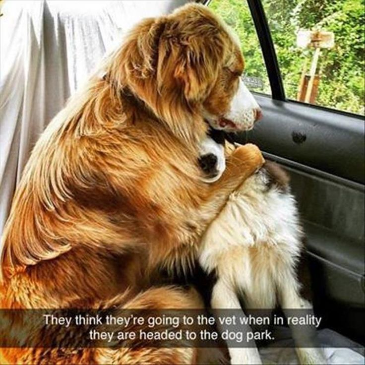 Awe, they look so Pitiful!  Enjoy RushWorld boards, BARK RUFFINGTON'S DOG KINGDOM and GHOSTLAND SCENES OF ABANDONMENT.  See you at RushWorld on Pinterest!