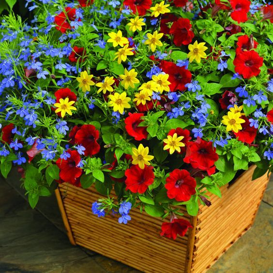 121 best images about container gardening on pinterest window boxes fall containers and - Growing petunias pots balconies porches ...
