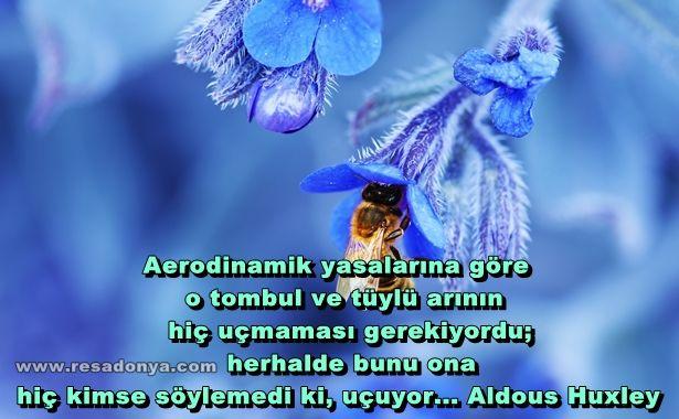 Aerodinamik yasalarına göre o tombul ve tüylü arının hiç uçmaması gerekiyordu; herhalde bunu ona hiç kimse söylemedi ki, uçuyor... Aldous Huxley http://www.resadonya.com/aldous-huxley-resimli-sozleri/