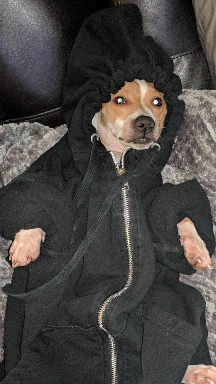 Duke loves blankets so we stepped up our game tonight http://ift.tt/2kITJLN