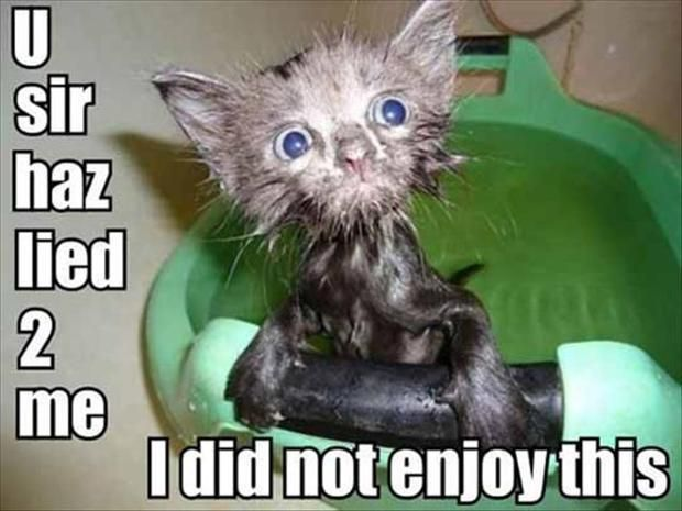 Cute Animals with Captions | animal pictures with captions, lolcats, i did not enjoy this