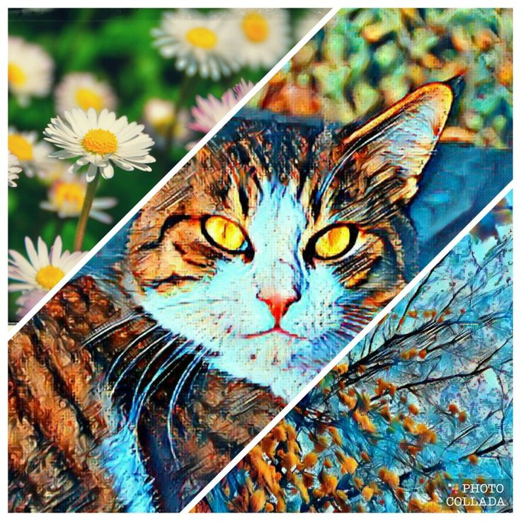 #schizzo #cat