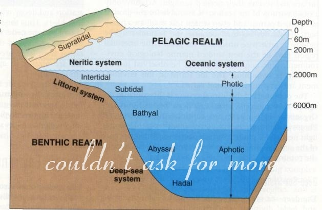 the gallery for ocean zones diagram worksheet