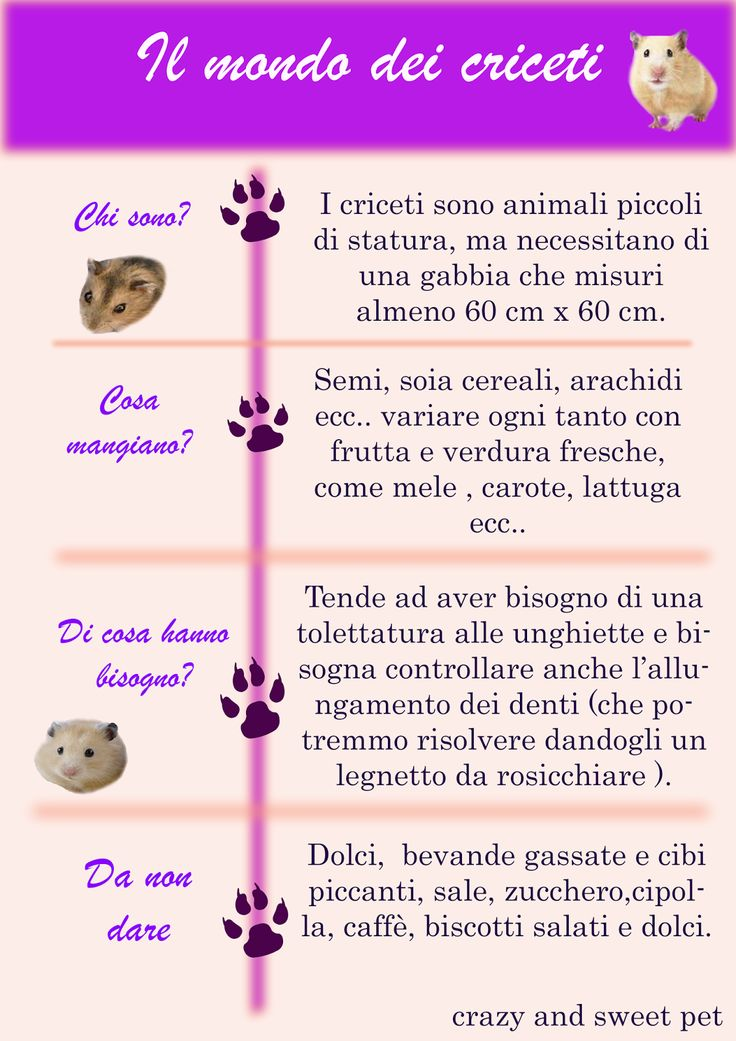 Crazy and Sweet Pets: Il mondo dei criceti